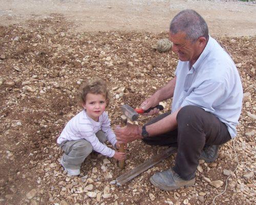 Plantation au vignoble