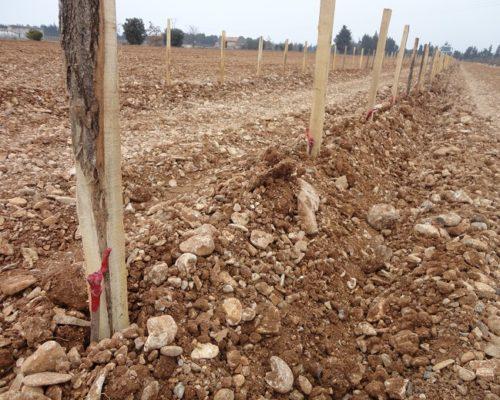 Plantation Grenache 2013