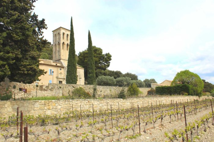 Vignoble Muscat petits grains BIO d' AOP Muscat de Beaumes-de-Venise du Domaine Chant des Loups