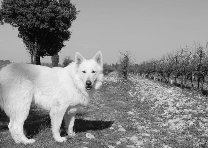 La légende du Chant des Loups
